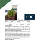 Plantas Silvestres Comestibles y Medicinales.docx