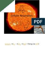Cellular Respiration