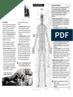 Sistema Nervioso Informacion