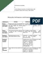 Tabela de msuculos