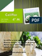 Coliflor.pptx