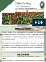cultivodesorgo-171003011038