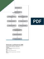 Extracción y Purificación de ADN