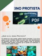 Reino Protista 01