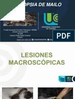 NECROPSIA DE MAILO.pptx