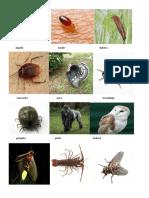 Animales Primaria 4to