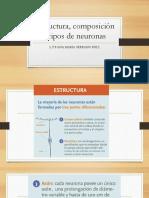 Estructura, Composición y Tipos de Neuronas