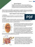 Apuntes Anatomia  Digestivo