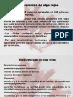 10. Biodiversidad Rhodophyta