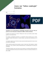 Ven Por Primera Vez Hélice Cuádruple de ADN en Humanos