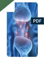 Neurotransmisores_2010a.pdf