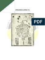 05._ Órganos Zang Fu