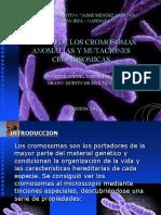 estudio de los cromosomas
