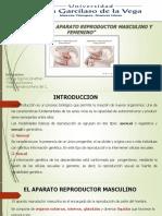 EL APARATO REPRODUCTOR Caracteres Anatomicos Funcionales 1