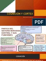 Cognición y Cortex