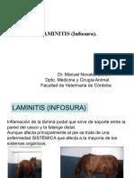 Tema 60 - Laminitis-Infosura Copia 2
