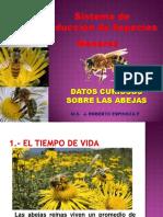 Datos curiosos sobre las abejas