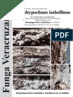 178_Botryohypochnus isabellinus.pdf