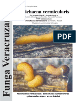 177 Perichaena vermicularis