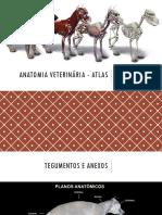 Anatomia-Veterinaria-Atlas.pdf