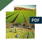 La Agricultura Se Define Como