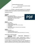 Morfologia y Estructura Urbana