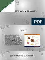 Sistema Hormonal 1