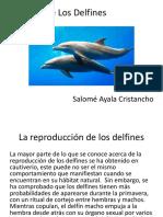 La Vida de Los Delfines