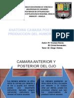 Seminario Glaucoma 2019