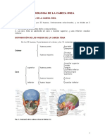 RADIOLOGIA_DE_LA_CABEZA_OSEA (1).pdf