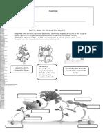 Guía Ciclo Planta