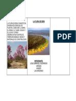 La Flora de Beni Consiste en Diferentes Especies de Plantas