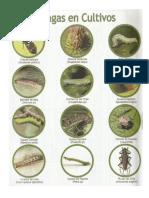 Plagas y Enfermedades en Los Cultivos