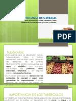Tecnología Agroindustrial II