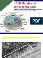 The Cell Membrane.pdf