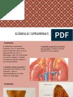 Apresentação de Glandulas suprarrenais