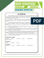 Taxonomía Vegetal Para Quinto de Secundaria