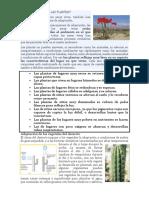 Adaptaciones de las palntas a los climas.docx