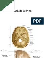 Notas Anatomía cráneo