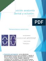 Copia de Exposición anatomía dental y oclusión