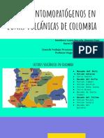Hongos Entomopatógenos en La Actividad Volcánica Colombia