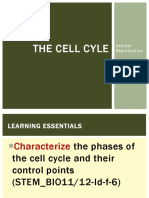 4. the Cell Cyle Biology Stem Class