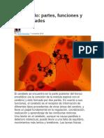 El cerebelo (2).docx