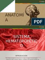 Presentación de diversos temáticas anatómicos