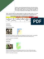 Fauna y flora Mangle.docx