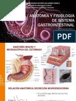 Anatomía y Fisiología del Sistema Gastrointestinal