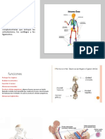 Sistema Oseo Humano