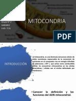 MITOCONDRIA exposicion.pptx