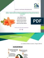 frigorificos (2)