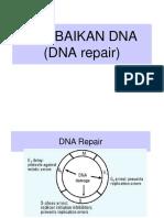 14 Repair Dna Ok